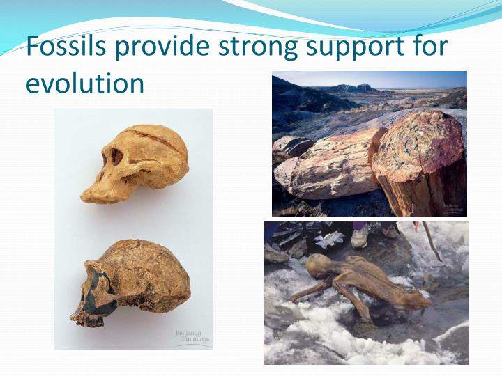 Fossils provide strong support for evolution