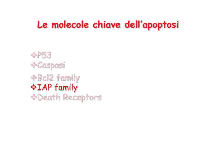 Le molecole chiave dell apoptosi