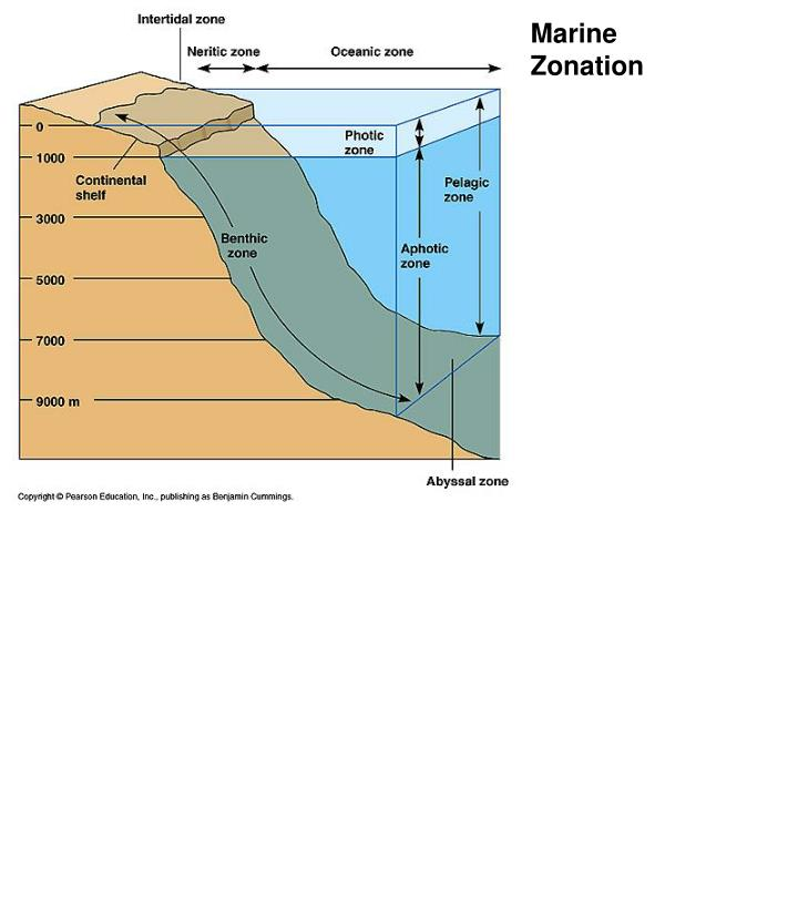 zonation An arrangement or distribution of things into zones  definition from wiktionary, the free dictionary.