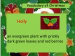 holly an evergreen plant with prickly dark green leaves and red berries