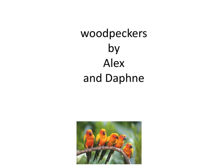 woodpeckers by alex and daphne n.