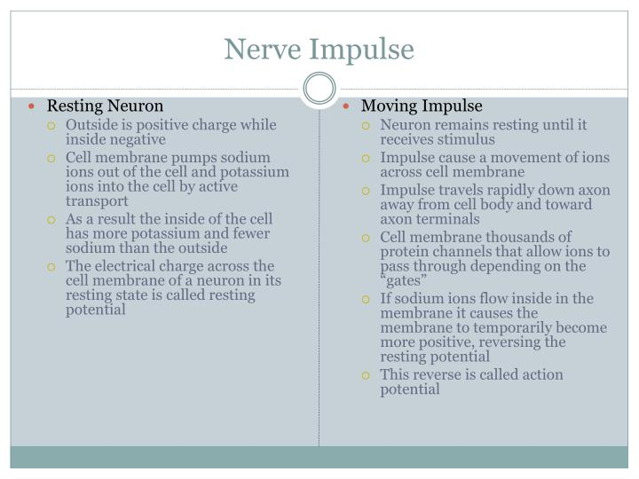 Nerve Impulse