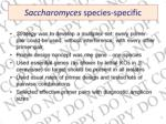 saccharomyces species specific