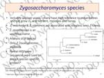 zygosaccharomyces species