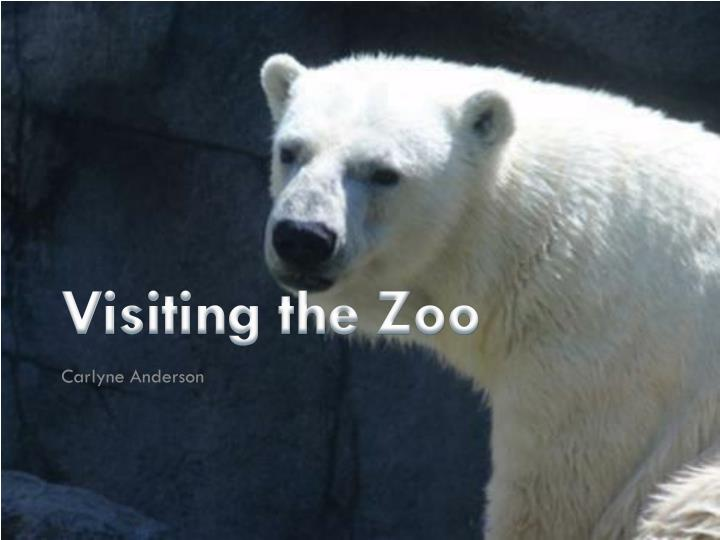 visiting the zoo n.
