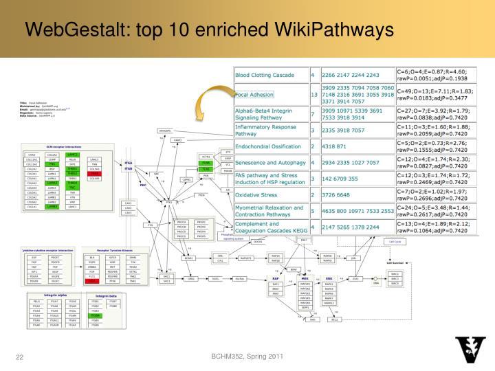 WebGestalt