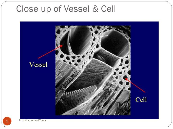 close up of vessel cell n.
