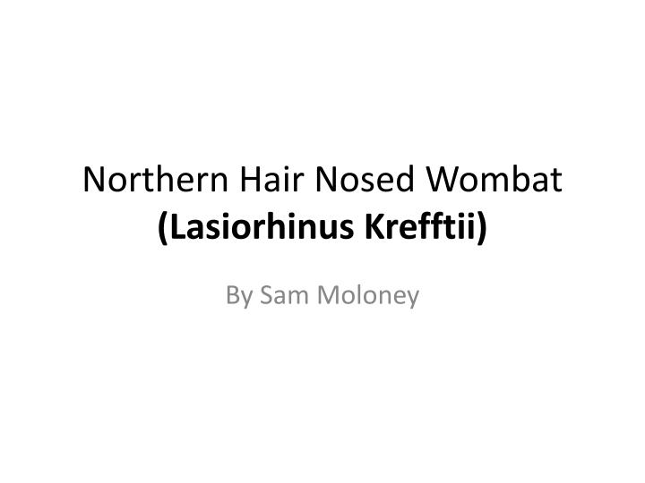 Northern Hair Nosed