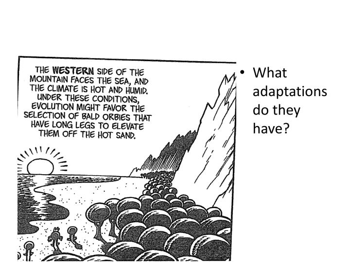 What adaptations do they have?
