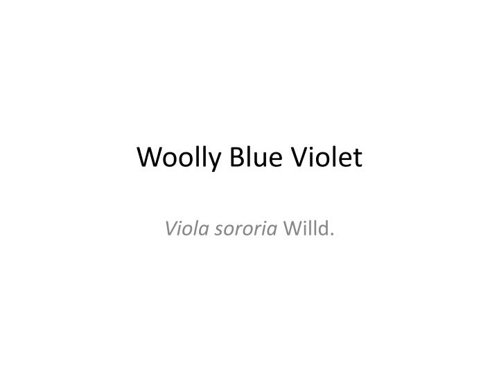 woolly blue violet n.