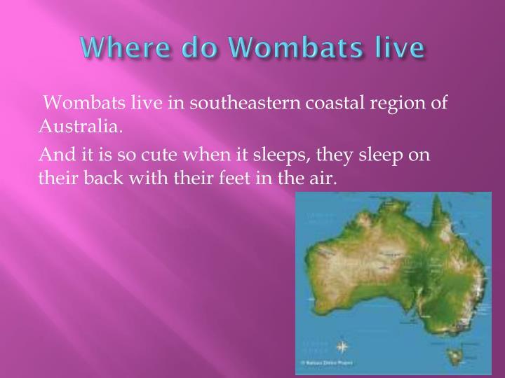 Where do Wombats live