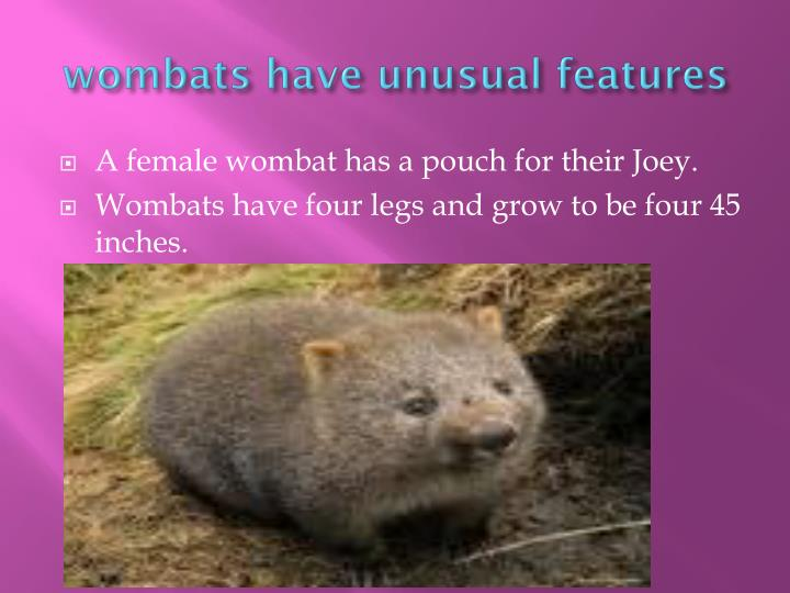 wombats have unusual features
