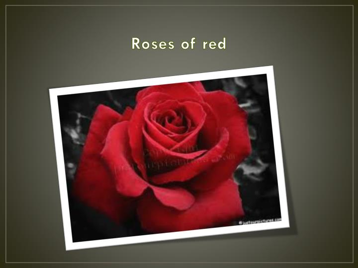 Roses of red