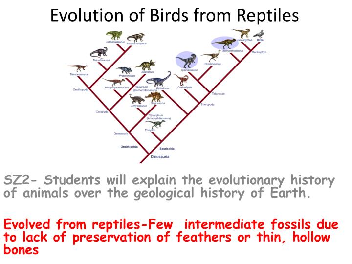 evolution of birds from reptiles n.