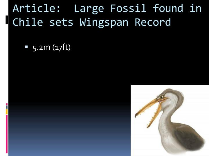 Article:  Large Fossil found in Chile sets Wingspan Record
