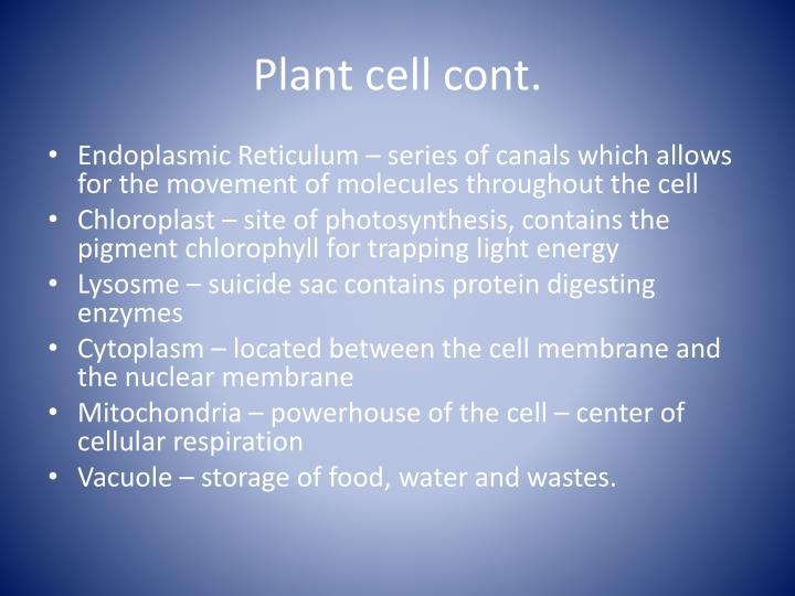 Plant cell cont.