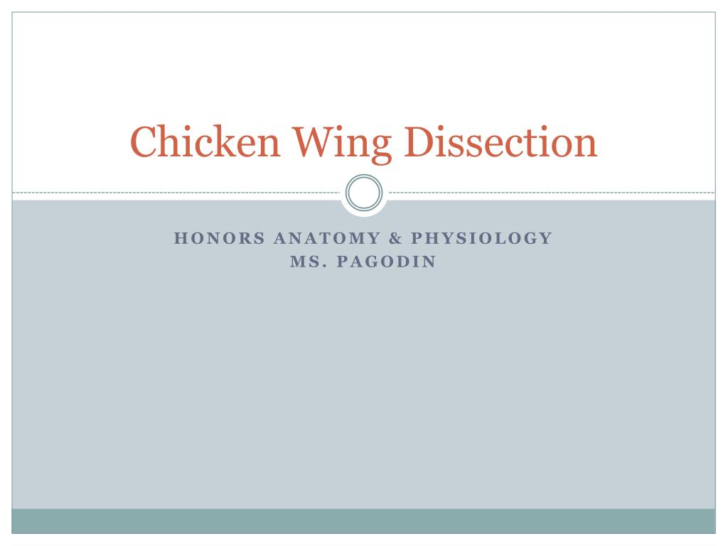 Ppt Chicken Wing Dissection Powerpoint Presentation Id2449352
