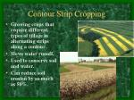 contour strip cropping