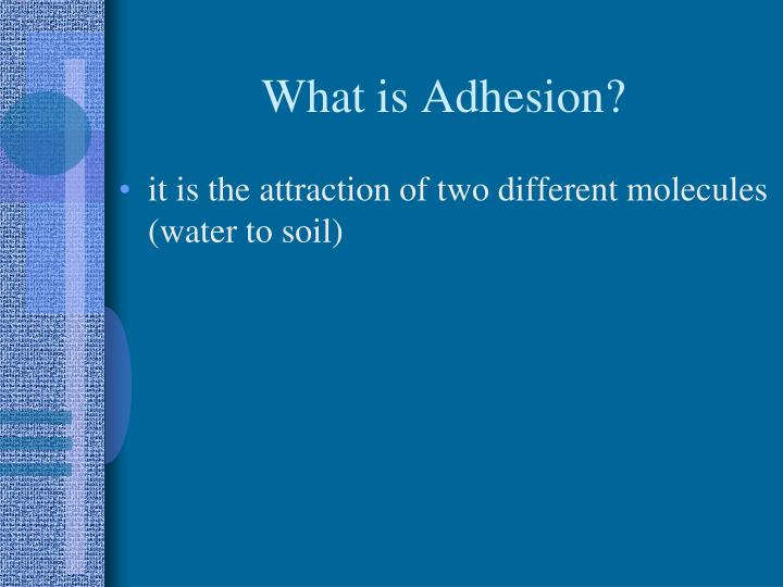 What is Adhesion?