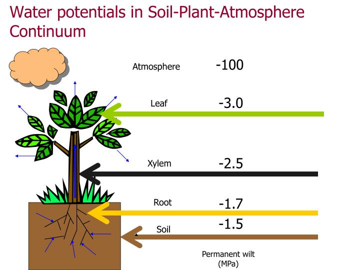 ppt soil water potential measurement powerpoint