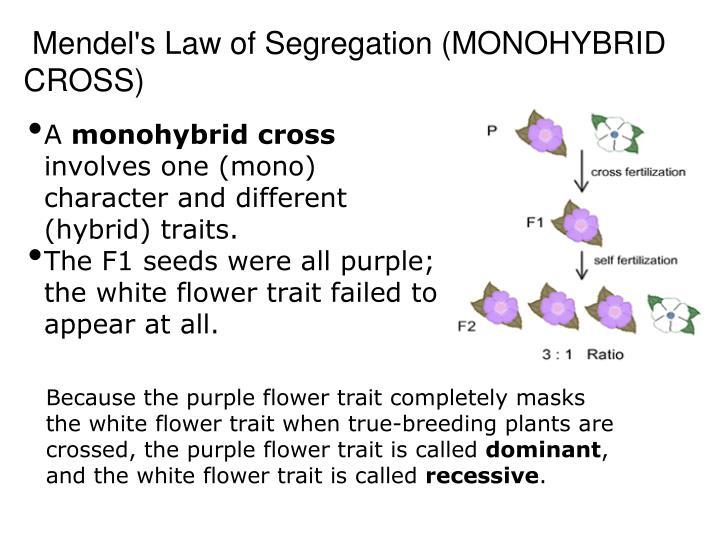 Mendel s law of segregation monohybrid cross