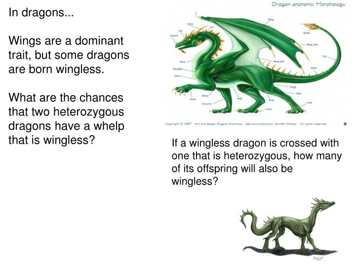 In dragons...