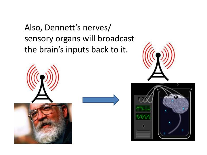 Also, Dennett's nerves/ sensory organs will broadcast the brain's inputs back to it.