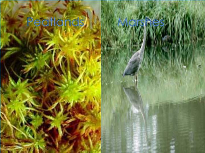 Peatlands marshes