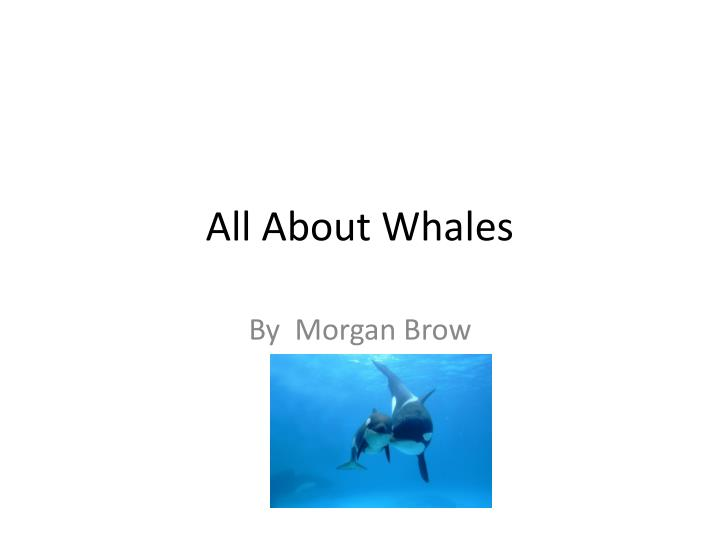 all a bout whales n.