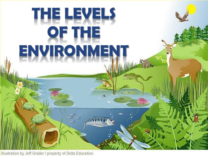 the levels of the environment n.