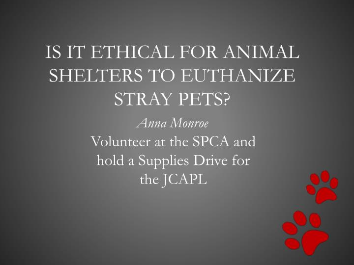 is it ethical for animal shelters to euthanize stray pets n.