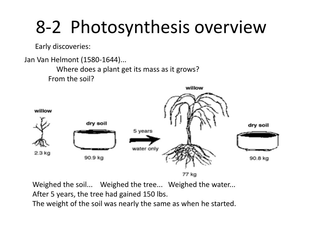 PPT - Photosynthesis & Cellular Respiration PowerPoint ...