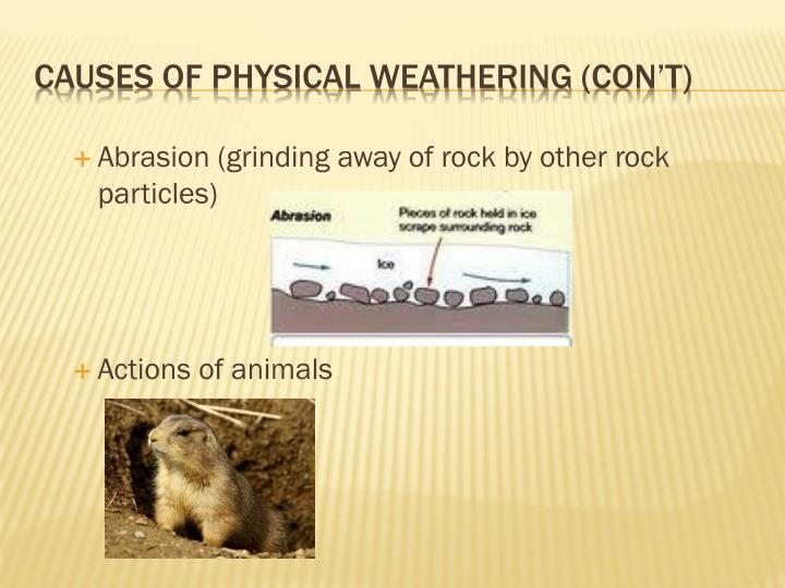 Causes of physical weathering con t