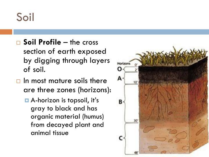mature soil profile