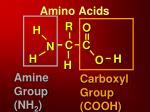 amino acids1