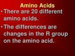 amino acids3