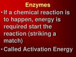 enzymes3