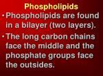 p hospholipids
