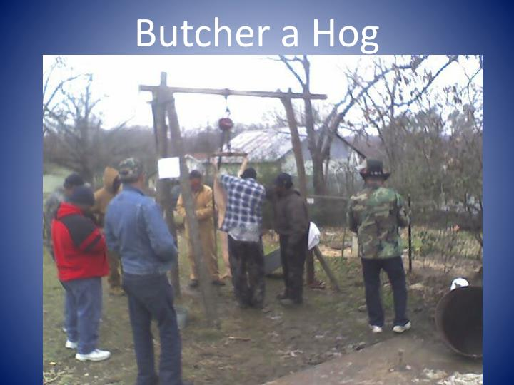 butcher a hog n.