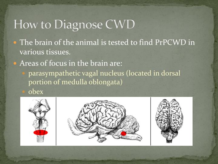 How to Diagnose CWD