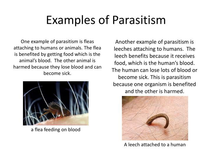 ppt - organism interactions powerpoint presentation - id:2456128