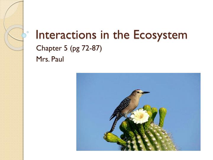 interactions in the ecosystem n.
