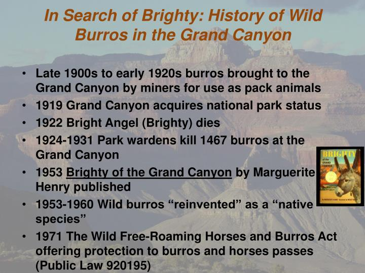 in search of brighty history of wild burros in the grand canyon n.