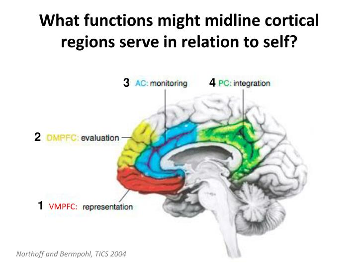What functions might midline cortical regions serve in relation to self?