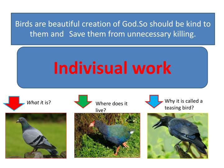 Birds are beautiful creation of