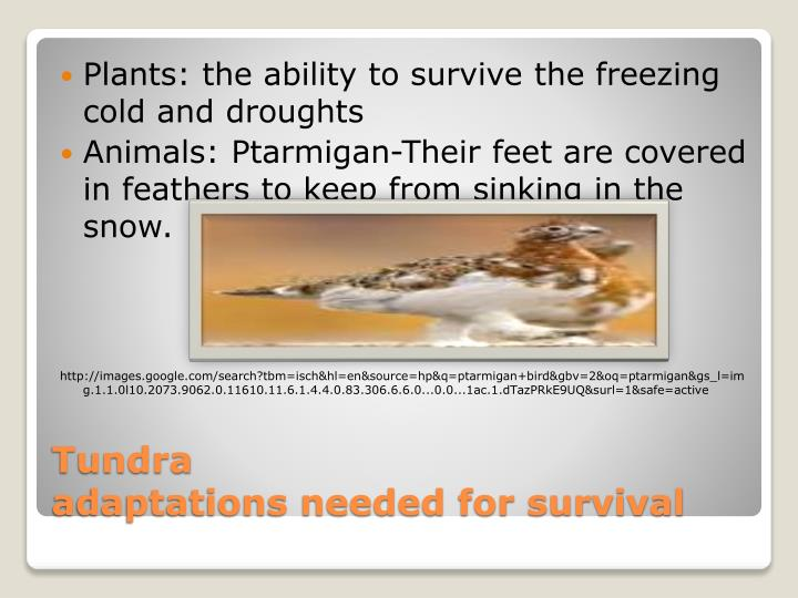 Plants: the ability to survive the freezing cold and droughts