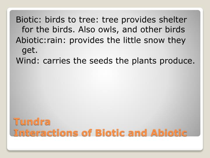 Biotic: birds to tree: tree provides shelter for the birds. Also owls, and other birds
