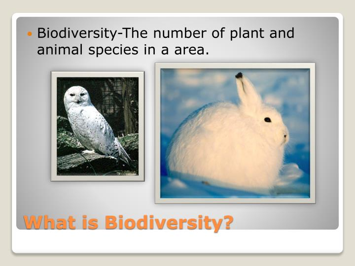 Biodiversity-The number of plant and animal species in a area.