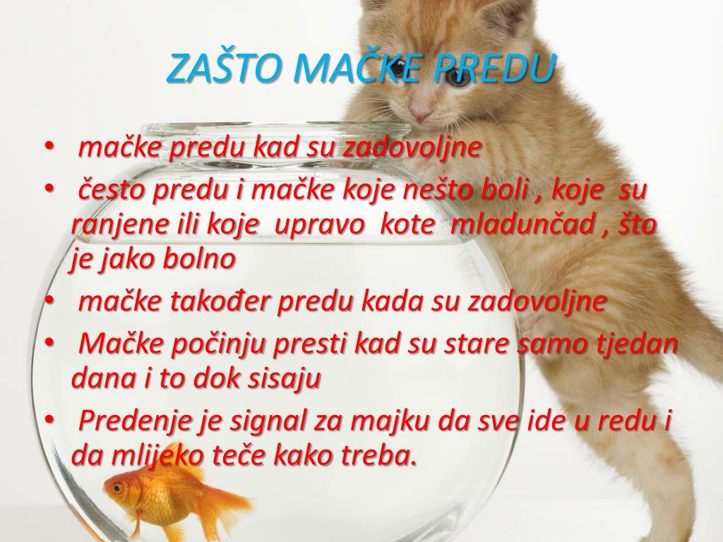 www.free crna maca.com