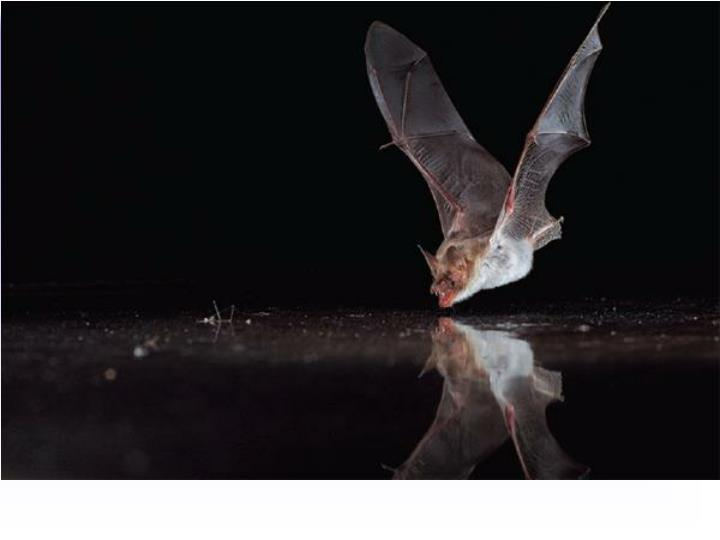 How would you test if bats actually use ultrasounds for navigation?